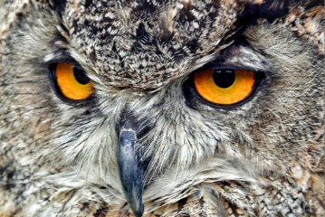 'Good luck owl' up for sale for Rs 3 lakh, seized in Chamarajanagar