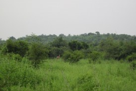 Announce UP's Mirzapur forests as a conservation reserve, environmentalist saying