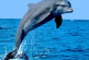 India's first dolphin observatory coming up in Bihar